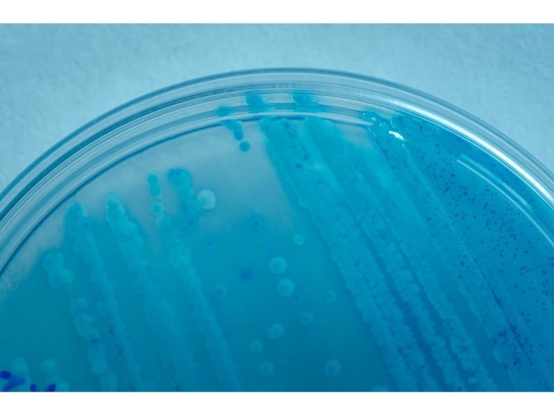 laboratorio-micral-lugo (21)